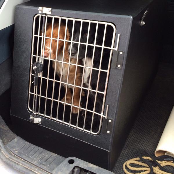Plaztek Veterinary Suppliers Dog Transit Boxes Kennels